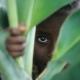 Child peeking through tall plants.